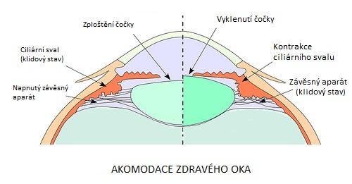 Akomodace oka