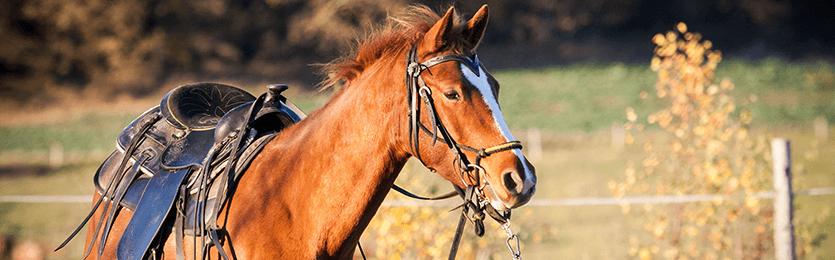 Milovníci koní a kontaktní čočky